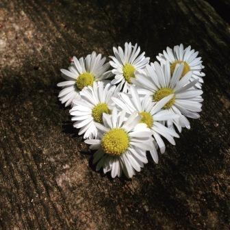 img_0557-3-naturheilpraxis-klein